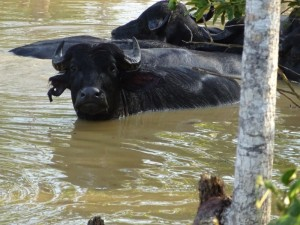 102 0008 Peru - Iquitos - Bethmann