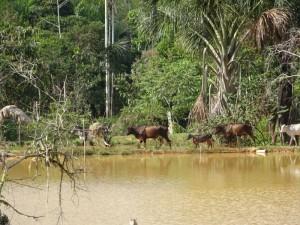 102 0012 Peru - Iquitos - Bethmann