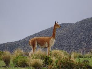 108 0153 Chile - Fahrt nach Arica