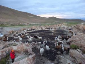 112 0090 Chile - Atacama Tour - Villamar