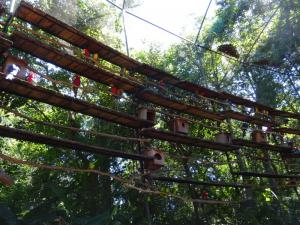 120 0189 Brasil - Parque das Aves