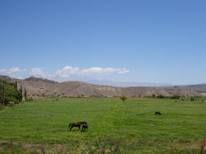 126 0070 Argentina - Rodeo