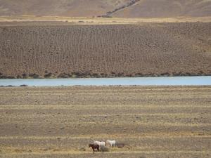 148 0029 Argentina - Fahrt nach Calafate