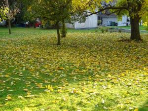 181106 Zu Hause Herbst 06