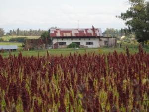 172 0027 Uruguay - Nueva Helvetica - Camping Hotel Suizo