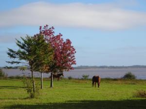 183 0103 Uruguay - Belén